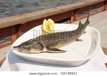 Sturgeon roasted on a plate.fish in the Red Book