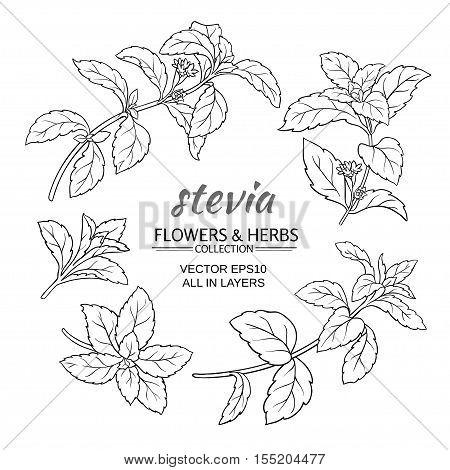 stevia herb vector set on white background
