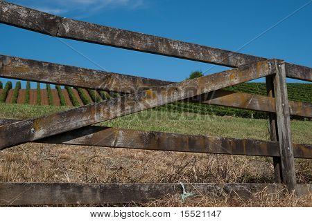 Farm  gate with vineyard beyond.