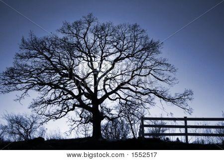 Oak Tree Blue