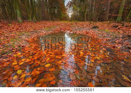 Beautiful Wild Fall Forest With Vibrant Colors