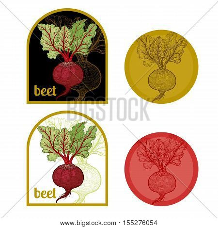 Set of labels with a picture of beet. Templates for creating labels packing vegetables. Vector illustration. Hand drawing.