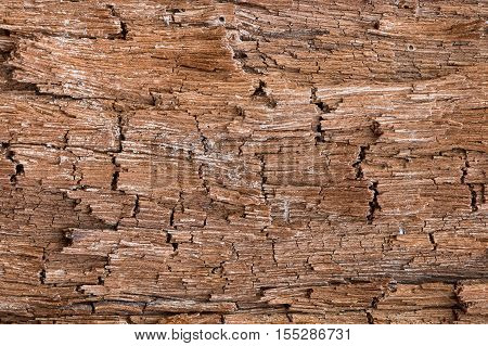 Bark Tree Texture, brown bark wood backgrounds
