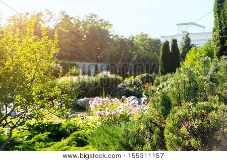 Trees and bushes. Green plants and sunshine. Quiet place outside the city. Where nature thrives.