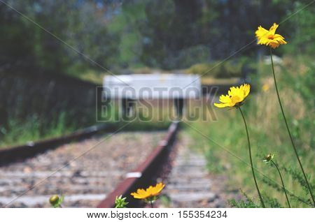 Flowers and weeds at the end of an abandoned old railway line. Selective focus.