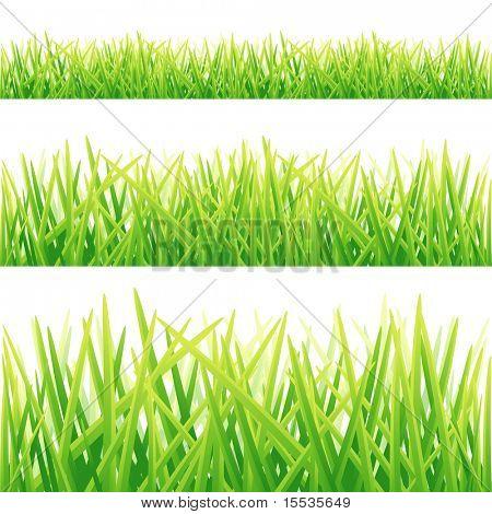 Eine Auflistung von frischen grünen Gras-Linien. Vektor-illustration