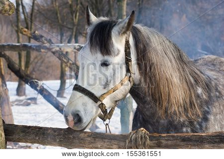 Portrait of dappled mare at winter open stall