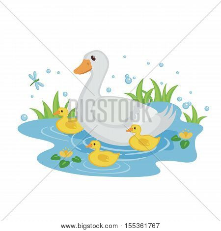 Cute mother duck with ducklings swimming in the pond isolated on white background. Baby shower design. Farm bird duck. Vector illustration.