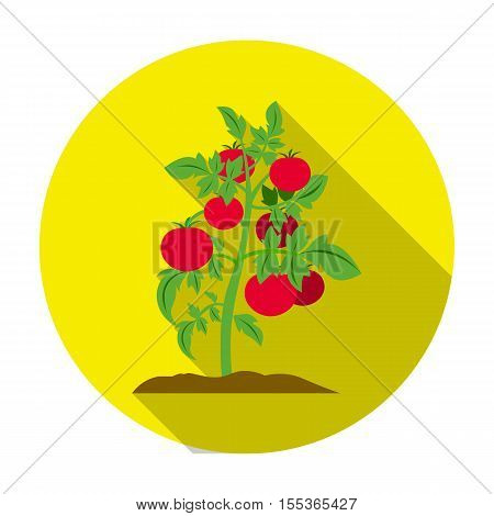 Tomato icon in flat style isolated on white background. Plant symbol stock vector illustration.