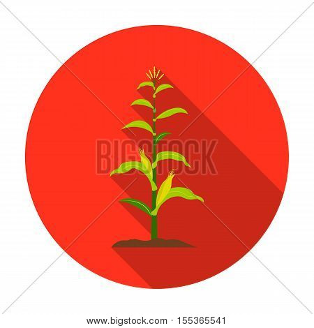 Corn icon in flat style isolated on white background. Plant symbol vector illustration.