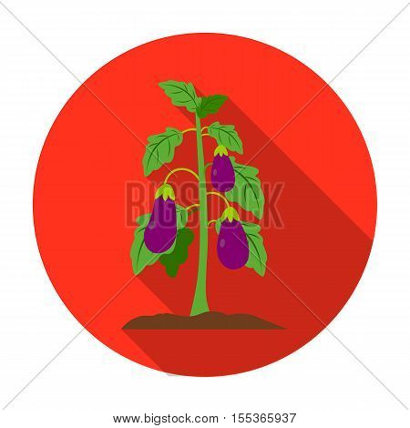 Eggplant icon in flat style isolated on white background. Plant symbol vector illustration.