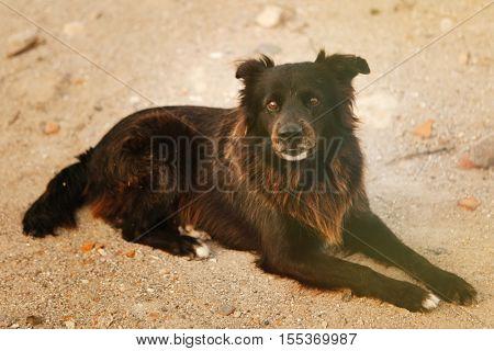 Black street dog sitting on the sand