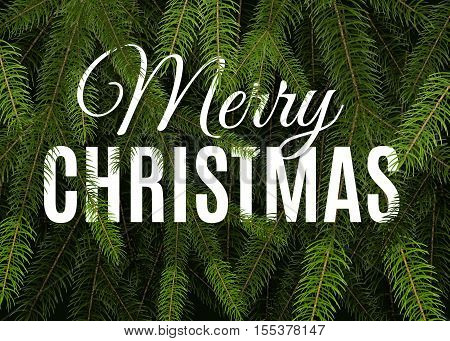 Big winter vector label with realistic green fir tree branches. Holiday background with christmas tree brunches and greeting text. Vector illustration
