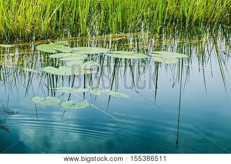 Water reflection of sky rural Bengal Howrah West Bengal India