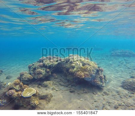 Underwater landscape with seabottom and coral reef. Sea sand at the bottom. Colorful sealife. Tropical seaside with reflections. Snorkeling photo. Optimistic seaview in blue and yellow