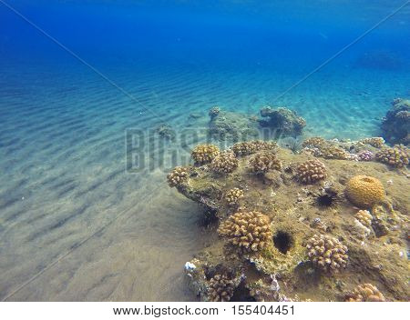 Tropic sea landscape with sand bottom and coral reef. Colorful sea life. Tropical seaside with reflections. Snorkeling photo. Optimistic seaview in blue and yellow colors. Natural aquarium in lagoon