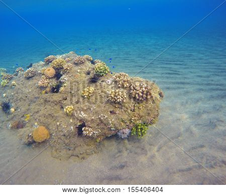 Underwater landscape with seabottom and coral reef. Sea sand at the bottom. Colorful sealife. Tropical seaside with plants and animals. Snorkeling photo. Optimistic seaview in blue and yellow