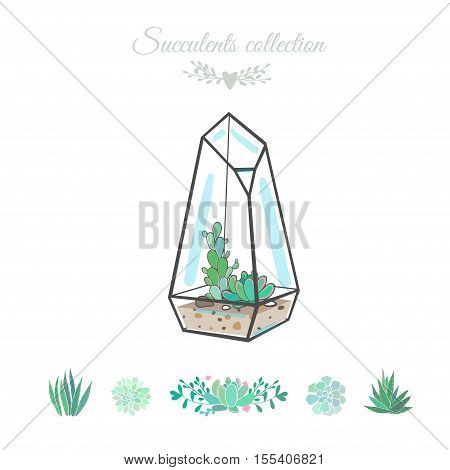 vector illustration with succulents in geometric vase, isolated on white, succulent set