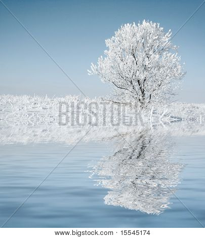 Alone frozen tree with reflection. white winter
