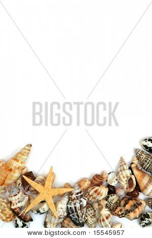 summer concept. seashells frame on white background