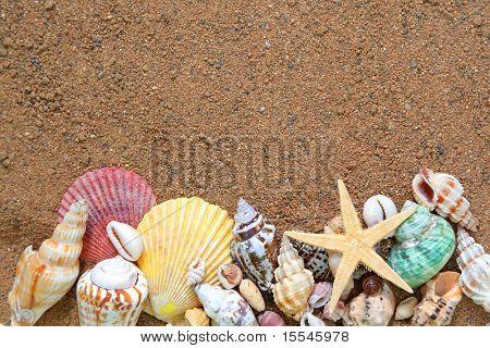 summer concept. seashells frame on sand background