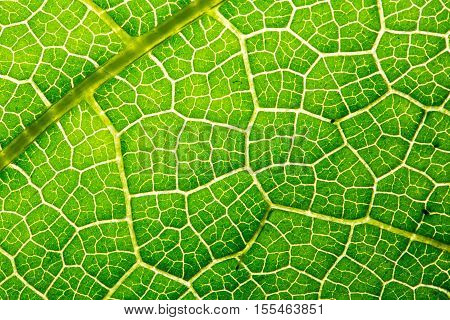 Fresh Leaf Texture Or Leaf Background For Design With Copy Space For Text Or Image. Abstract Green L