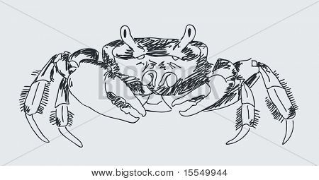Hand drawn crab Vector. Visit my portfolio for big collection of doodles
