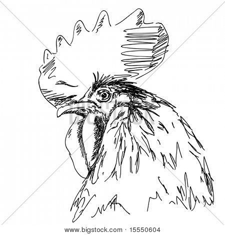 Hand drawn cock Vector