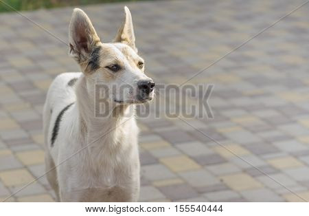 Outdoor portrait of young mixed breed positive dog standing on a street