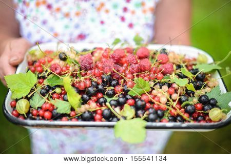 Berries in a bowl. Two kinds of blackcurrant. Red currant, black currant. Macro photo of berries. Close. Macro berries. Red and black berries. Still life