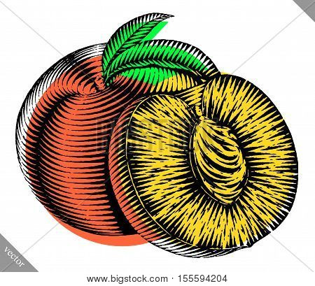 Engraved isolated old-styled engrave vector illustration of a peach