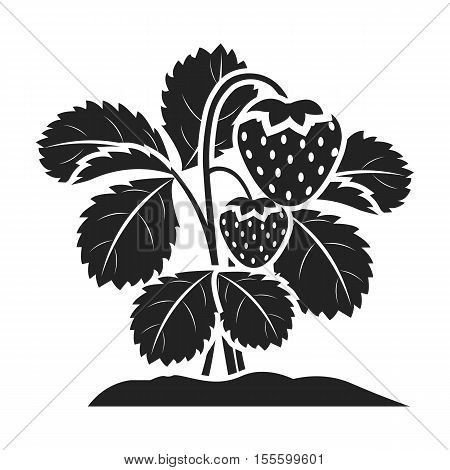 Strawberry icon in black style isolated on white background. Plant symbol vector illustration.