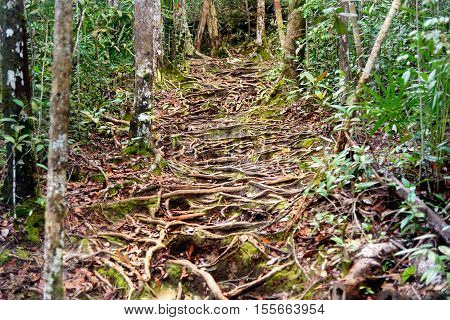 Trail In The Rainforest At Bako National Park