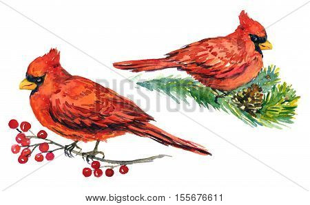 Cardinal birds on branches with frozen berries and pine with cones, for Christmas greeting card, hand painted watercolor illustration