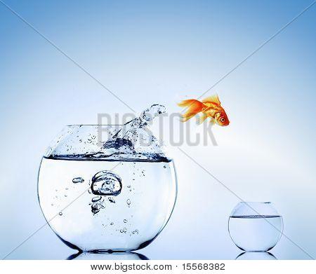 Peixinho pulando do aquário. Escape.