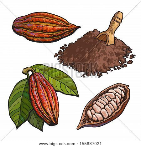 Cacao fruit, beans and powder, set of style vector illustrations isolated on white background. Hand drawn cacao fruit, raw cacao beans and heap of powder with a wooden skoop