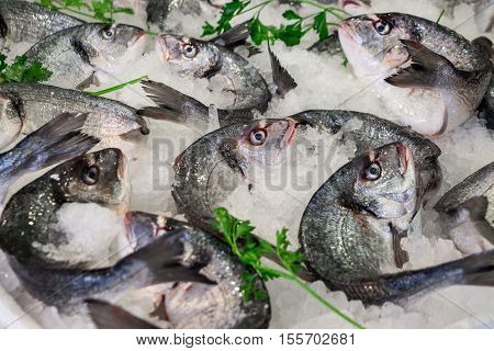 Fresh sea bass on ice in the greek fish shop lined up for sale refreshed parsley. Sea bass fishes on ice and parsley. Horizontal. Daylight. Close.
