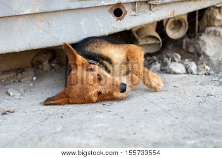 unhappy homeless dog comes out from under the rubble of collapsed metal construction
