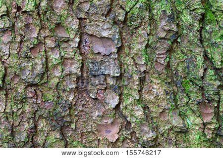 Tree bark Heavily textured moss covered tree bark