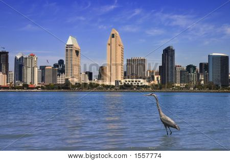 Great Blue Heron In Front Of San Diego Skyline