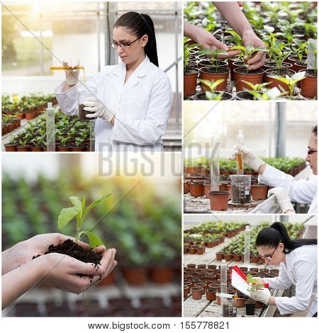 Collage Of Engineer In Greenhouse