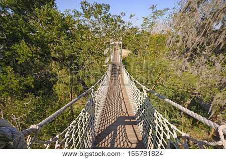 Canopy Walk in a Subtropical Forest in the Santa Ana Wildlife Refuge in Texas