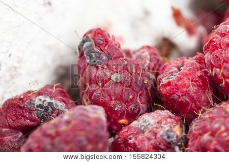 photographed ripe red raspberries, which appeared mold, a small depth of field