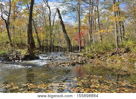 The autumn landscape on small woodsy river.