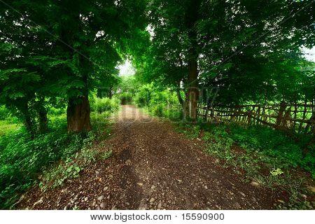 Gravel rural road in park