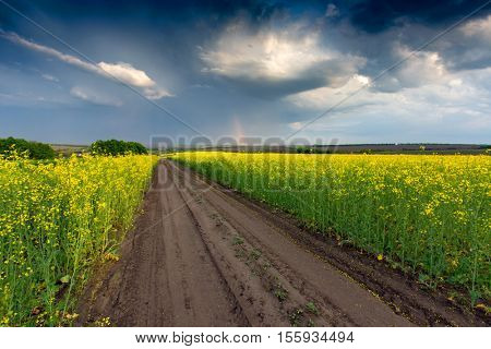 Scene with rut road across rape field before thunderstorm