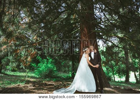 Wedding photo shooting. Bridegroom and bride standing under pine tree. Bride embracing groom with one hand and holding his other hand. Outdoor, full body