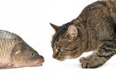 stock photo of domestic cat  - cat and fish isolated on a white - JPG