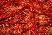 picture of crawdads  - Cajun crawfish located in the heart of cajun country - JPG