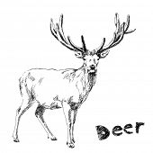 Hand drawn deer Vector. Visit my portfolio for big collection of doodles